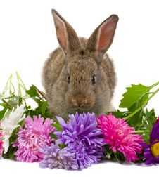 Free Bunny Smelling Flowers Royalty Free Stock Image - 6692906