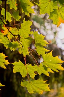 Free Autumn Leaves Stock Photography - 6694492