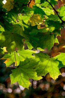 Free Autumn Leaves Royalty Free Stock Photos - 6694498