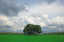 Free Beautiful Field With Trees In The Center Royalty Free Stock Images - 6695249