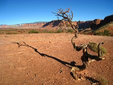 Free The Lonely Tree In The Canyon Stock Photos - 6695423