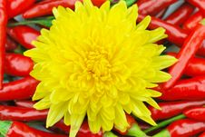 Free Chrysanthemums And Peppers Royalty Free Stock Images - 6696239