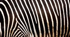 Free Stripes Royalty Free Stock Image - 6698086