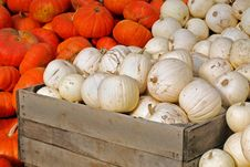 Free Harvest Bounty Stock Image - 6698151