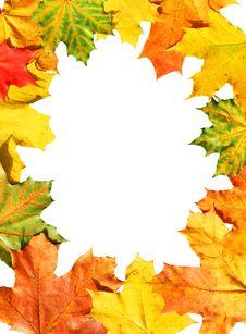 Free Autumnal Framework Stock Image - 6698321