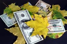Autumn Leaf Fall Of Dollars On A Black Background Royalty Free Stock Image