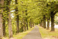 Free Path Through Trees Royalty Free Stock Images - 6699909