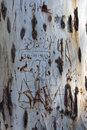 Free Old Tree Trunk With Names And Dates Etched In Stock Photography - 672052