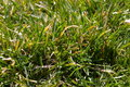 Free Green Grass Stock Photos - 677443
