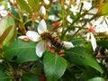 Free Honey Bee Stock Photos - 678923