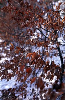 Free Winter Leaves Stock Photography - 670262