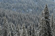 Free Snow Covered Trees Stock Photography - 670432
