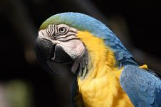 Free Macaw Royalty Free Stock Photos - 670458