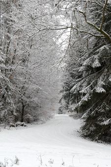 Free Forest Road In Winter Royalty Free Stock Image - 670476