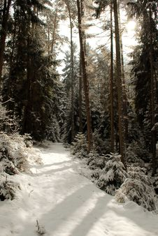 Free Forest Road In Winter Royalty Free Stock Images - 670489