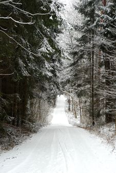 Free Forest Road In Winter Stock Photography - 670492