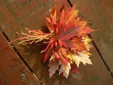 Free Maple Lefs Bouquet Royalty Free Stock Photo - 671605