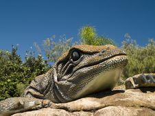 Free Lizard Stock Photography - 671812