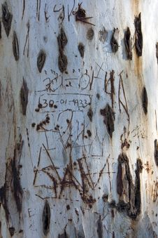 Old Tree Trunk With Names And Dates Etched In Stock Photography