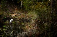 Free Heron Royalty Free Stock Photography - 672527