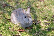 Free Very Fluffy Bunny Rabbit In A Field In Spain Royalty Free Stock Photos - 672668