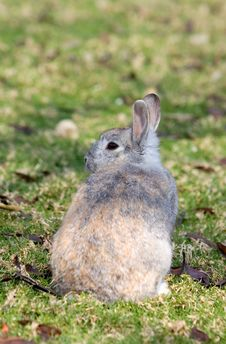 Free Very Fluffy Bunny Rabbit In A Field Stock Image - 672701