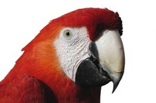 Free Macaw Detail Stock Photography - 673372