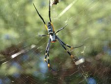 Free Spider Web Stock Images - 673374