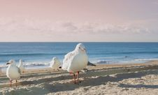 Free Sunrise Seagull Royalty Free Stock Photo - 673405