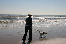 Free Beagle Dog Stock Photos - 673793