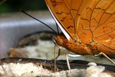 Free Feeding Butterfly Stock Image - 674991