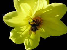 Free Flower Royalty Free Stock Image - 675286