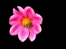 Free Flower Royalty Free Stock Photos - 675298