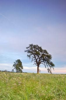 Free Springtime Meadow Stock Image - 675981