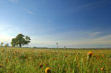 Free Springtime Meadow Royalty Free Stock Photos - 675988