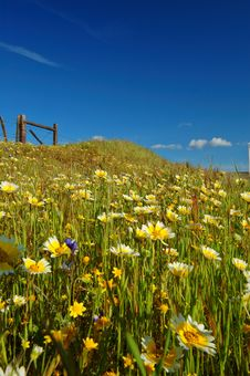 Free Springtime Meadow Royalty Free Stock Photography - 676177
