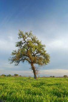 Free Springtime Landscape Stock Photography - 676262