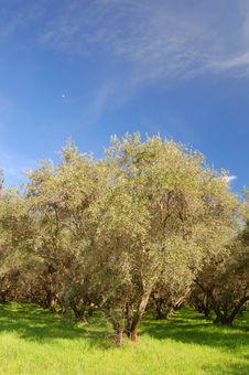 Springtime Orchard Stock Photo