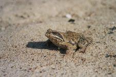 Free Frog Stock Photos - 676463