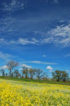 Springtime Meadow Stock Photos