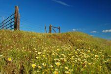 Free Springtime Meadow Royalty Free Stock Image - 676546