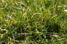 Free Green Grass Stock Photos - 677443