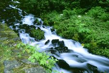 Free Wahkeena Creek Royalty Free Stock Image - 678236
