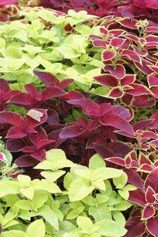 Free Leaf Stock Image - 679031