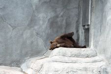 Free The Bear On Rest Stock Photo - 679140