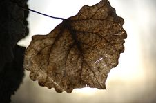 Free Brown Leaf Royalty Free Stock Photos - 679578