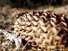 Free Fir Cone Stock Photos - 679843