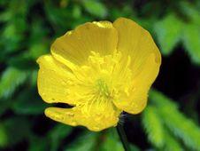 Free Yellow Joy Royalty Free Stock Image - 679866