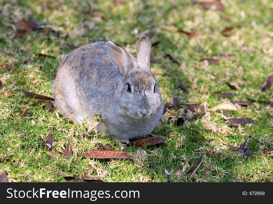 Very fluffy bunny rabbit in a field in Spain