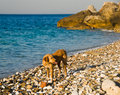Free Dog On A Beach Stock Photography - 6701682
